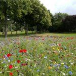 Die EURAC erforscht die Südtiroler Artenvielfalt
